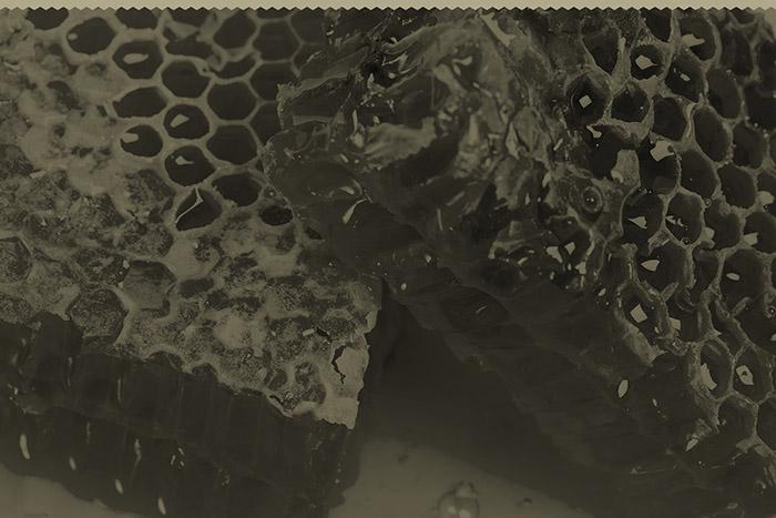 wax honeycombs with honey - close up