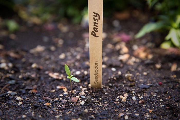 Seedspoon5