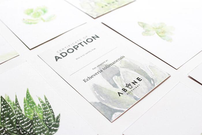 ABANE Succulent Visual Branding3