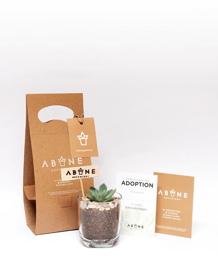 ABANE Succulent Visual Branding5