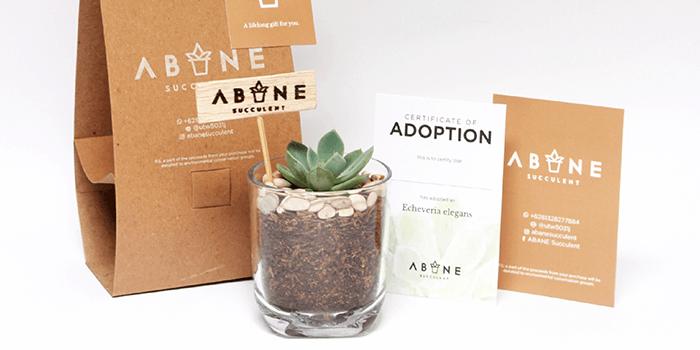 ABANE Succulent Visual BrandingMAIN